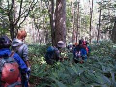 信大ルート樹林帯