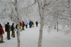 シラカバ樹林をスノーシューで歩く