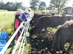 牛の飼養管理
