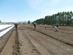 キャベツ圃場への施肥