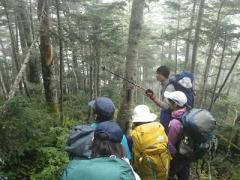 登山中は山岳環境における森林植生への理解を深める
