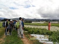 野菜農家見学