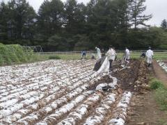 高原野菜の圃場管理作業