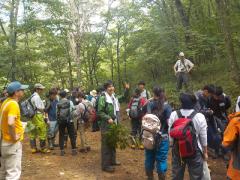 広葉樹二次林で植物採取