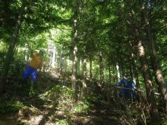 H30年度自然の成り立ちと山の生業演習:ヒノキ人工林にて枝打ち