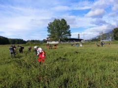 放牧地の管理