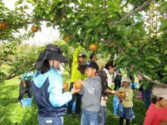 梨の収穫体験