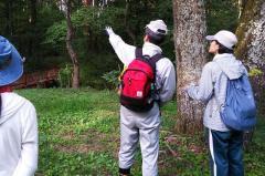 植生図の作成(10月6日):戸谷川の河畔林にて