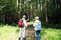 鳥類調査(10月6日):構内演習林の作業道にて