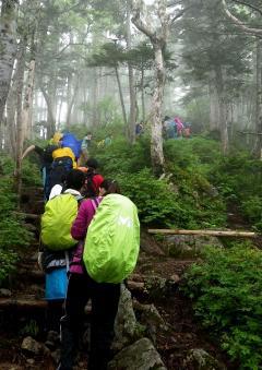 標高が上がり、亜高山帯の針葉樹林に変化してきました。
