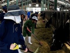 乳牛舎の管理実習