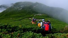 稜線上で腰くらいの背丈のハイマツ帯を歩く