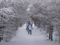 歩くスキー