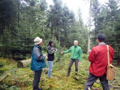 シュヴァルツヴァルトの造林体系