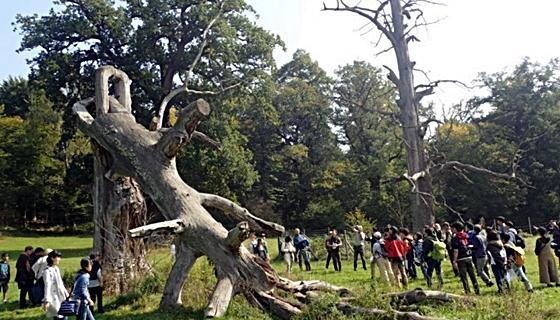 平成29年度海外農学実習「ロッテンブルク林業大学実習」を実施しました