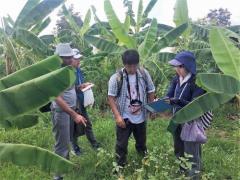 カンボジア北部ウドンメンチェイ州の畑で栽培中の作物の調査を行う松島准教授ら