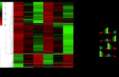 図:卵用鶏と肉用鶏の筋芽細胞における遺伝子発現パターン。筋芽細胞の分化に伴って発現が特徴的に変化する4つの遺伝子群(WD, UD, UG, WG)を同定し、詳細な解析を行った。