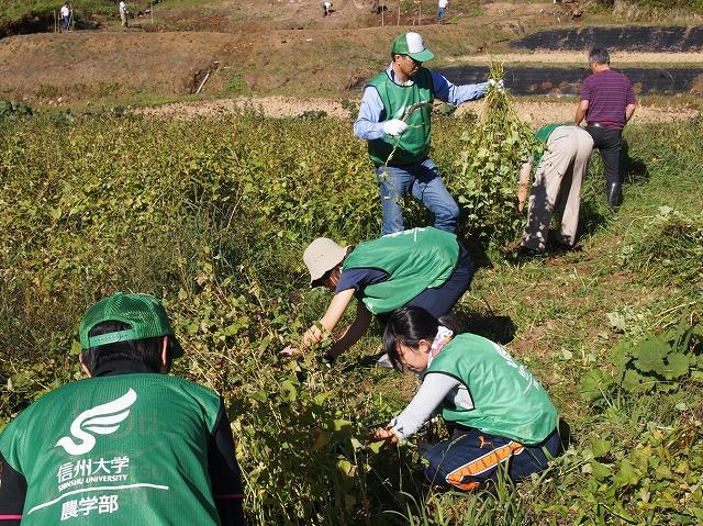 2013年10月6日 ソバ収穫作業に8名が支援