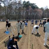 4月10日 ジャガイモの植込み