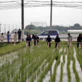 6月18日 水田管理(持続的生物生産システム実習)