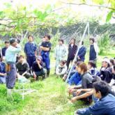 6月6日 ブドウの整枝・摘房01