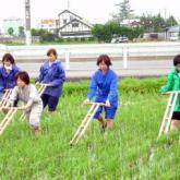 6月19、20日 水田管理02