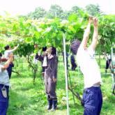 7月11日 薬剤散布と果樹・野菜の管理02