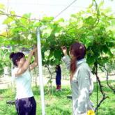 7月11日 薬剤散布と果樹・野菜の管理03