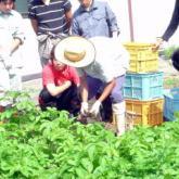 7月11日 薬剤散布と果樹・野菜の管理04