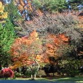 秋の農学部(原盤)