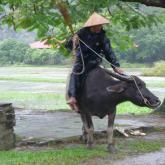 水牛に乗る