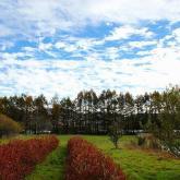 秋色の高原(野辺山ステーション)
