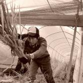 第3回フォトコン 研究活動部門 最優秀賞「収穫作業」佐々木大さん