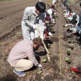 H24.4.23 山菜定植(森林科学科)
