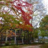 第5回フォトコンテスト農学部キャンパス部門 優秀賞「秋のおとずれ」唐木理恵子さん