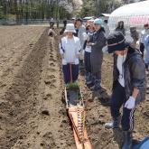 H24.4.26 野菜苗定植(食料生産科学科・動物生産学コース)
