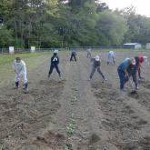 H24.5.10 野菜管理(食料生産科学科・農学コース)