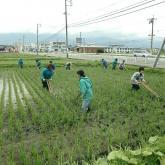 H24.6.21 水田除草(食料生産生産科学科・動物生産学コース)