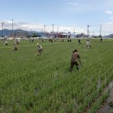 H24.6.22 水田除草(食料生産生産科学科・農学コース)