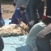 羊の管理 PART2