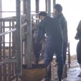 5/2 牛の管理 PART1