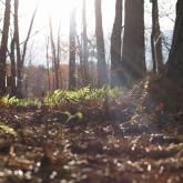 キャンパスの四季部門 林大河「林床の楽園」