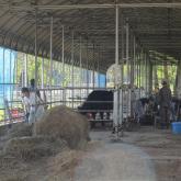 4/30 牛舎の管理①