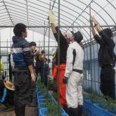 5/27 植物生産一貫実習Ⅰ(トマトの定植)