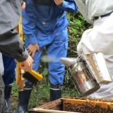 6/30 ミツバチの管理