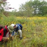 6月 野生資源植物基礎演習