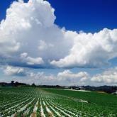 信州の四季部門最優秀賞 西尾有香音「収穫日和」