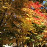キャンパスの四季部門優秀賞 佐藤公哉「みごとな紅葉」