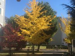 工学部内の鮮やかな紅葉3色(2015.11)