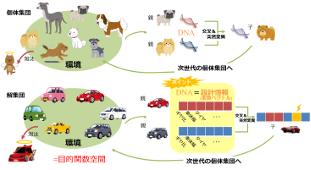 (上)生物の遺伝と進化  (下)進化計算による車の設計最適化 のイメージ図:環境に適した個体ほど次世代へ子を残し、その繰り返しにより個体集団が進化していく